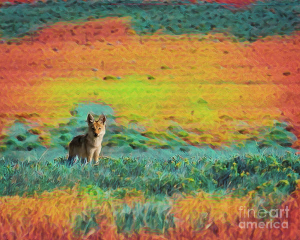 Photograph - Just A Pup by Jon Burch Photography