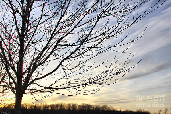 Photograph - Just A Tree And Clouds by Deborah Benoit