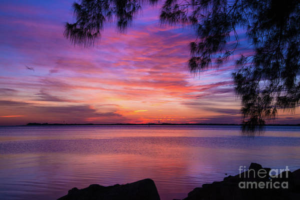 Photograph - Just Another Florida Sunset by Paul Quinn