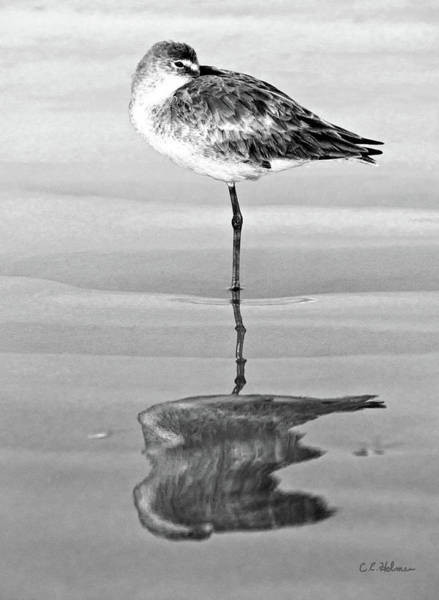 Photograph - Just Being Coy - Bw by Christopher Holmes