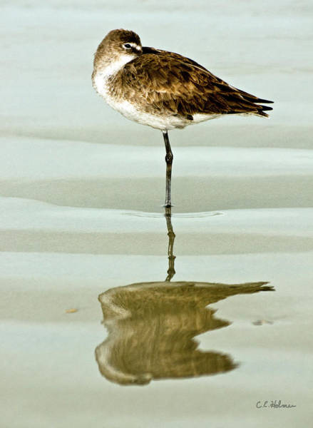 Photograph - Just Being Coy by Christopher Holmes