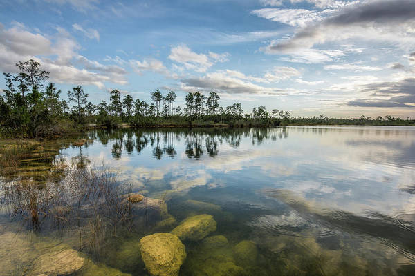 Everglades Photograph - Just Below In The Everglades by Jon Glaser