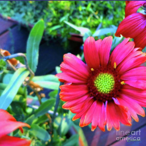 Fleur Digital Art - Just Brilliant by Zsanan Studio