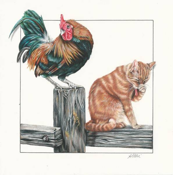Tabby Drawing - Just Chillin by Katie McConnachie