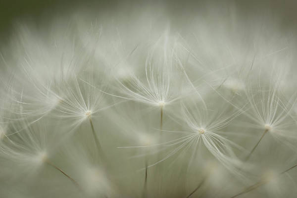 Photograph - Just Dandy by Brian Hale