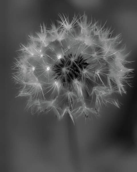 Photograph - Just Dandy by Rod Best