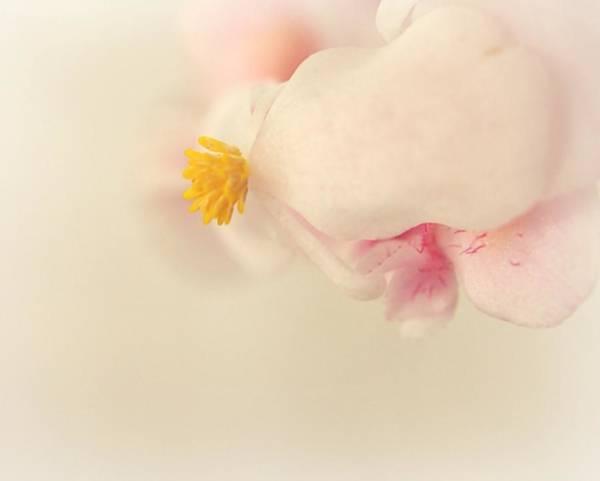Ceca Wall Art - Photograph - Just Flower by Svetlana Peric