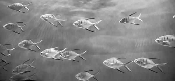 Photograph - Just Keep Swimming by David Hart