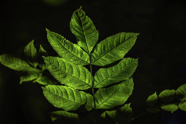 Photograph - Just Leaves #h7 by Leif Sohlman