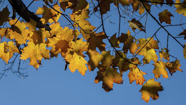 Photograph - Just Leaves by Kirkodd Photography Of New England