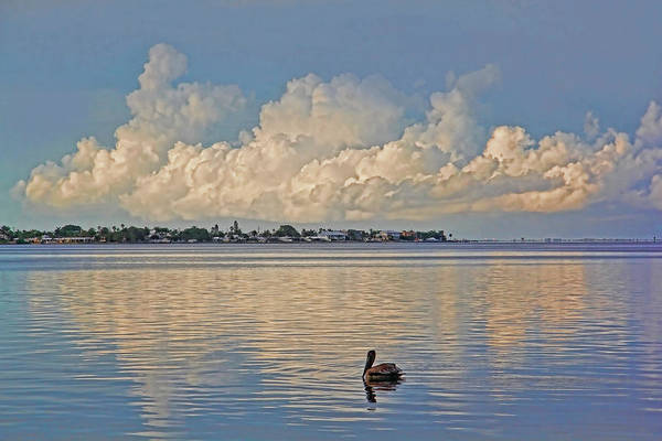 Just Birds Photograph - Just Me Myself And I by HH Photography of Florida