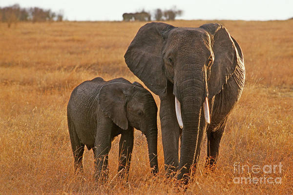 East Africa Wall Art - Photograph - Just Mom And Me by Sandra Bronstein