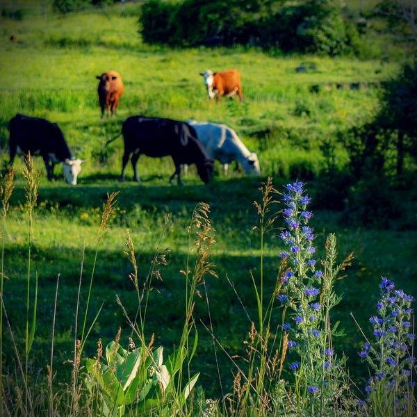 Photograph - Just One Day In The Country by Kendall McKernon