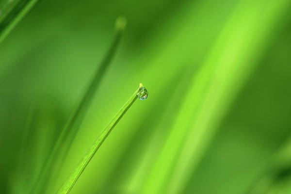 Photograph - Just One Drop by Rima Biswas