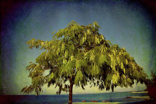 Photograph - Just One Tree by Milena Ilieva