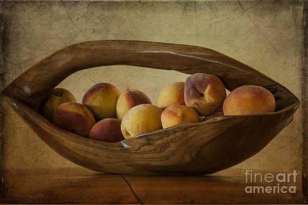 Photograph - Just Peachy by Elaine Teague