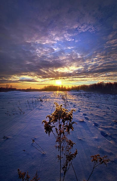 Photograph - Just Plain Cold by Phil Koch