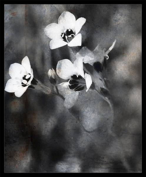 Photograph - Just So, Blossoms by Mario MJ Perron