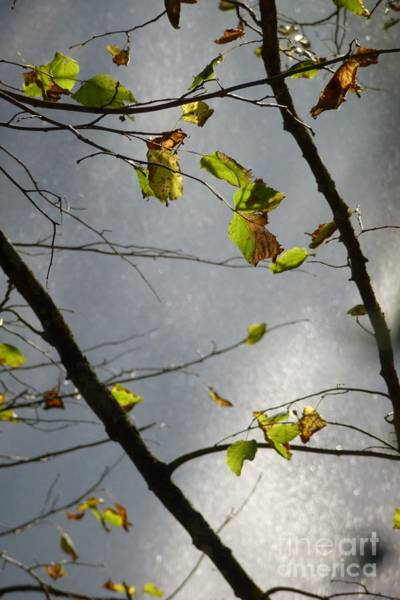 Photograph - Just Some Leaves 2 by Jean Bernard Roussilhe