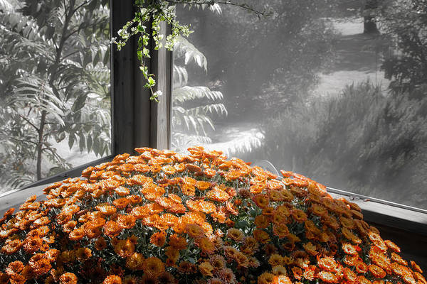 Photograph - Just The Mums by Peter Dyke