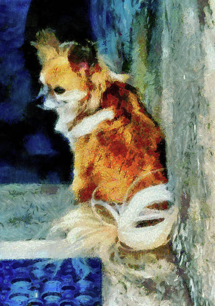 Hair Of The Dog Wall Art - Photograph - Just Waiting by Dorothy Berry-Lound
