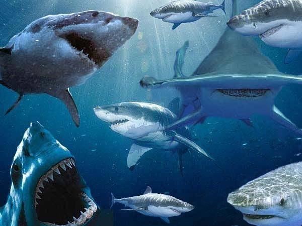 Hammer Head Shark Wall Art - Digital Art - Just When You Thought It Was Safe To Go Back In The Water by Philip McDonald