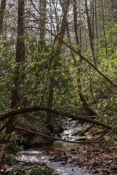Photograph - Justus Creek by Paul Rebmann
