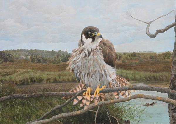 Wall Art - Painting - Juvenile Hobby On Somerset Levels by David Prior