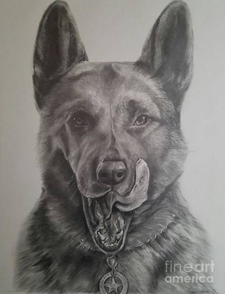 Drawing - K9  by Kathy Laughlin