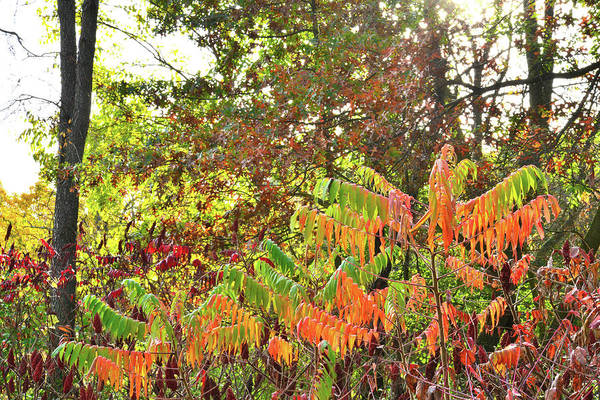 Photograph - Kaleidoscope Of Fall Color At Chain-o-lakes State Park by Ray Mathis