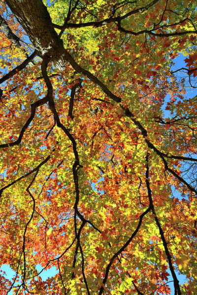 Photograph - Kaleidoscope Of Fall Color In Cook County by Ray Mathis