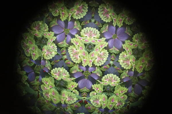 Wall Art - Photograph - Kaleidoscope Patterns by Beth Collins