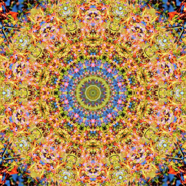 Digital Art - Hazel Pine by Frans Blok