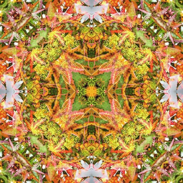 Digital Art - Liquidambar Green by Frans Blok