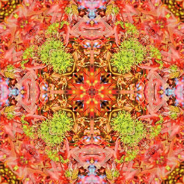 Digital Art - Spiky Fruits by Frans Blok