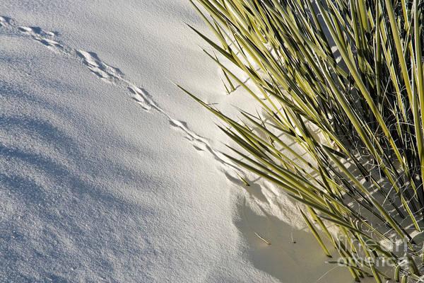 Yucca Elata Wall Art - Photograph - Kangaroo Rat Tracks by Inga Spence