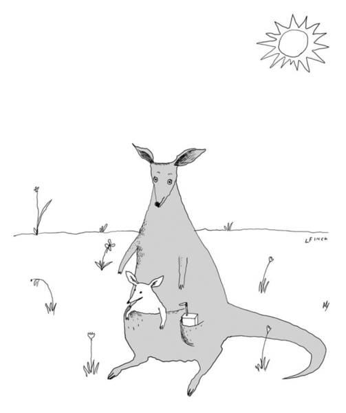Kangaroo Drawing - Kangaroo With Joey And Juice Box by Liana Finck