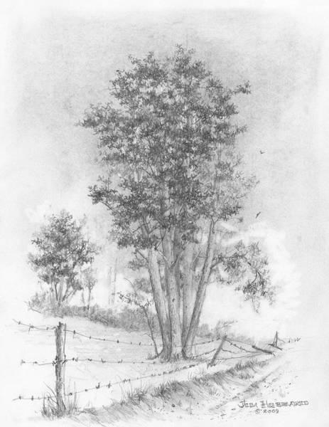 Wall Art - Drawing - Kansas-cottonwood by Jim Hubbard