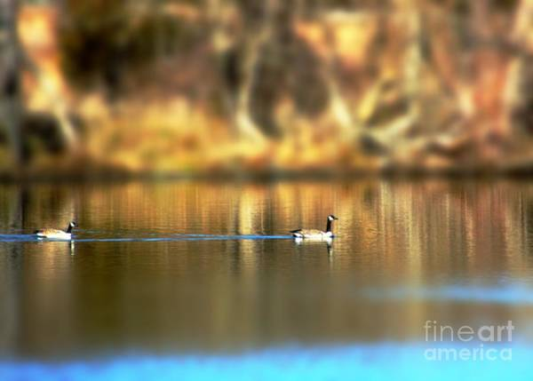 Photograph - Canada Geese In Kansas by Jenny Revitz Soper