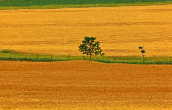 Photograph - Kansas Wheat Fields by Anna Louise