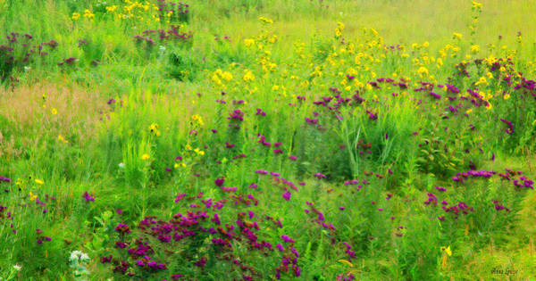 Photograph - Kansas Wildflowers Beauty by Anna Louise