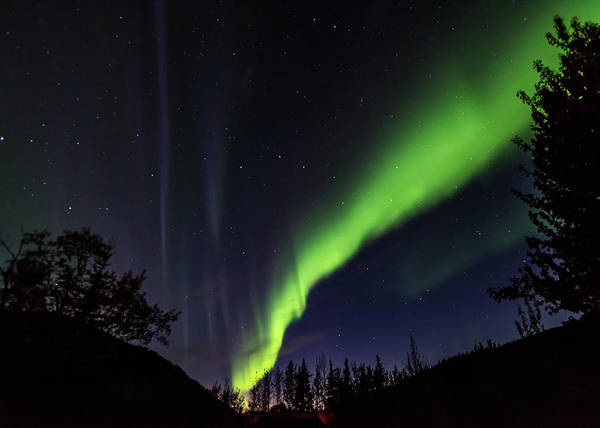 Photograph - Kantishna Northern Lights In Denali National Park by Brenda Jacobs