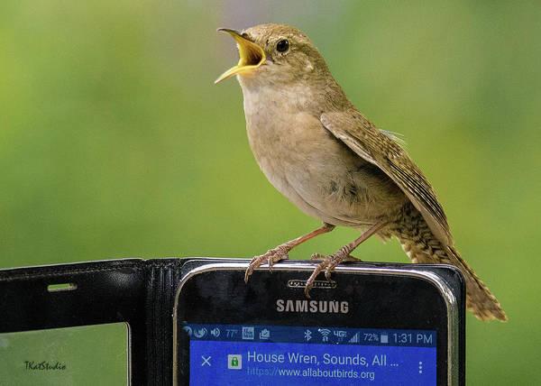 Photograph - Karaoke Wren by Tim Kathka