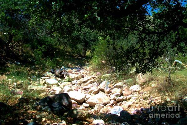 Photograph - Kartchner Mountain Hike by Stanley Morganstein