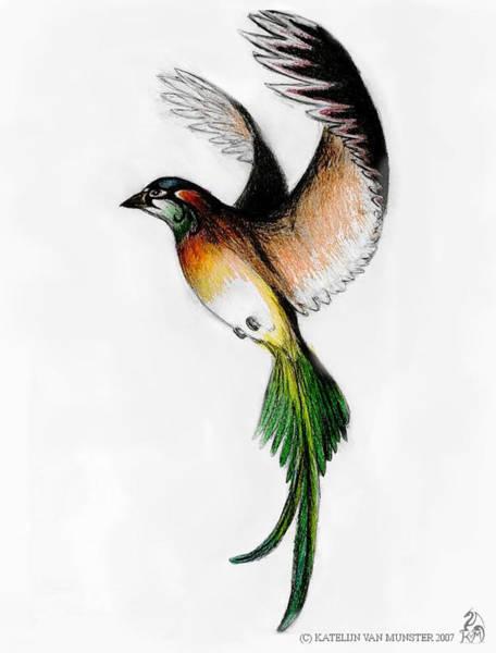 Wall Art - Drawing - Kathleen's Bird by Katelijn Van Munster