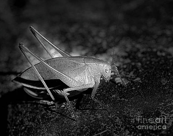 Photograph - Katydid Grasshopper by Smilin Eyes  Treasures