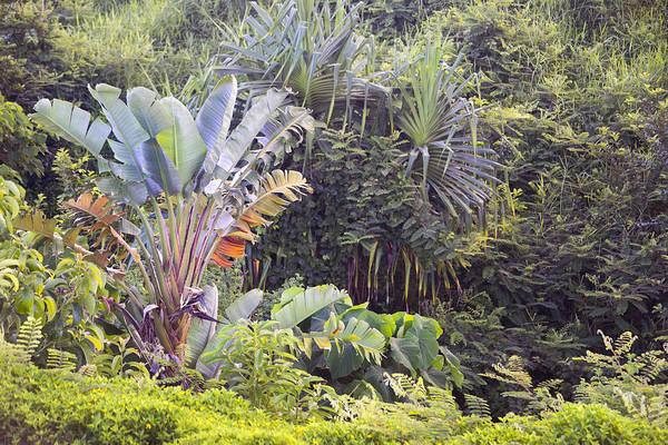 Wall Art - Photograph - Kauai Jungle by Frank Wilson