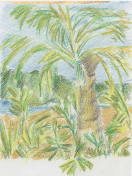 Drawing - Kauai Palms by Barbara Jacobs