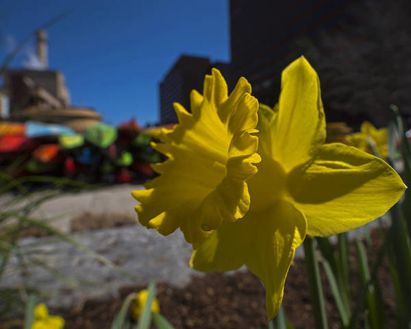 Photograph - Kayak Launch Daffodil Cambridge Ma by Toby McGuire