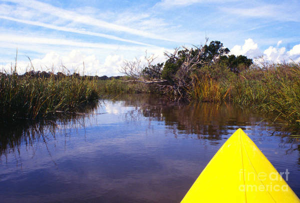 Photograph - Kayaking Bloody Marsh by Thomas R Fletcher
